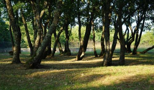 Stancija Ruseti